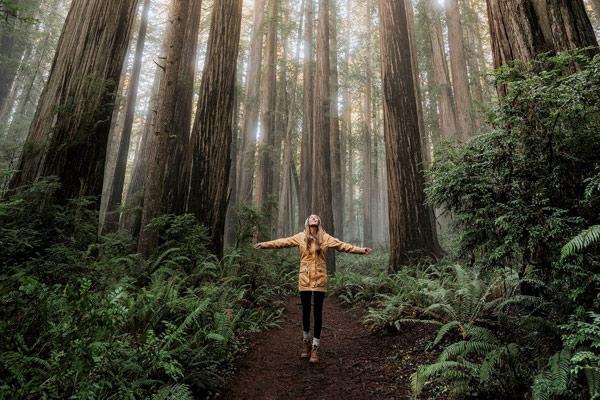 redwoods.renee.400